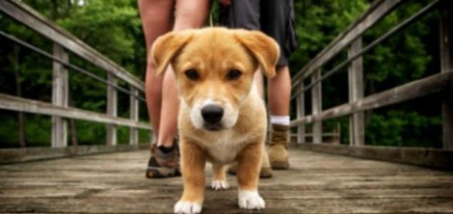 9 Razloga: Zašto je dobro zaljubiti se baš u vlasnika životinje?!