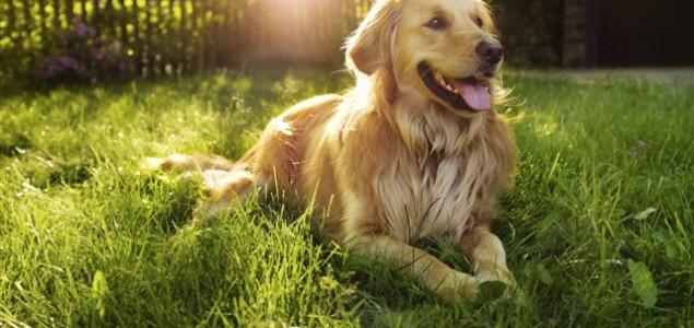 7 stvari koje radite koje nevjerojatno iritiraju vašeg psa, a to ni ne znate