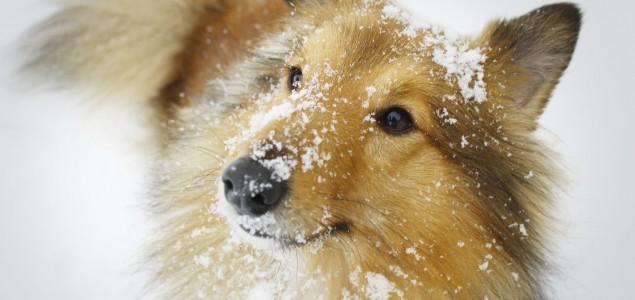 Psi i zima