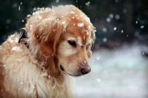 Pomozite napuštenim životinjama u hladnim danima