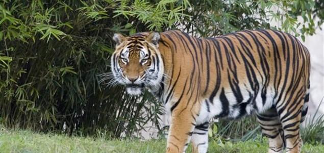 Ilegalna trgovina divljim životinjskim i biljnim vrstama doseže i do 150 milijardi kuna