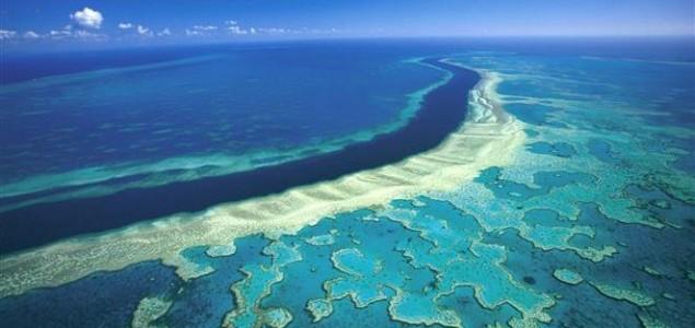 Svjedočimo najgorem masovnom izbjeljivanju Velikog koraljnog grebena