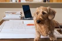 Prisustvo psa na poslu povećava produktivnost radnika i profit firme