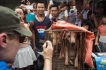 Kina: Aktivisti apeluju da se zabrani festival psećeg mesa