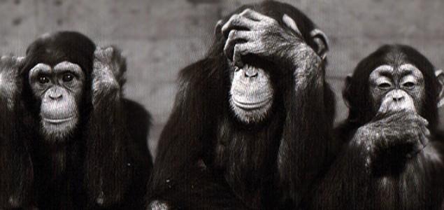 Rezultat slika za majmun piše