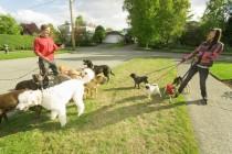 Kako psa naučiti da ne vuče na uzici? Korak po korak!
