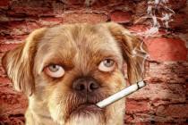 Zašto nije dobro pušiti u blizini ljubimca?