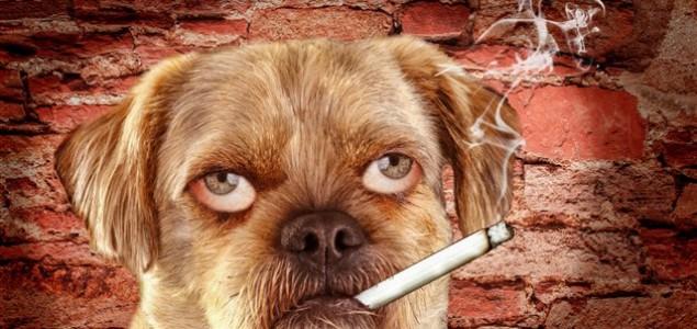Pas puše