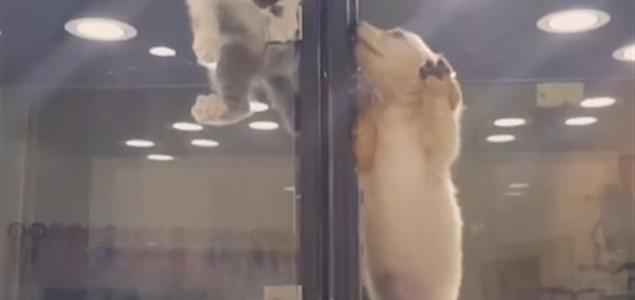 Razigrana maca uljepšala dan psiću