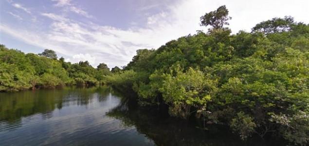 Suša smanjila apsorpcijsku sposobnost Amazone