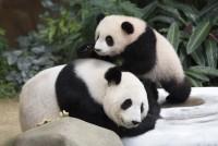 Kina je zabranila konzumaciju zaštićenih vrsta