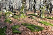 Nekropola Goršić polje u Goraždu na listi Svjetske kulturne baštine