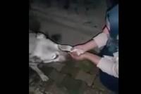Pogledajte kako je pas zahvalio djevojci koja mu je dala vode