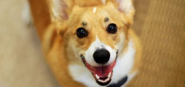 Kako naučiti psa da ne skače na ljude?