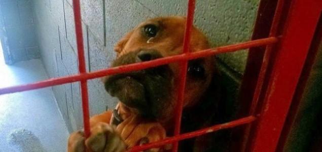 Pas koji plače u azilu