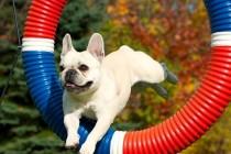 Sport je podjednako koristan i ljudima i psima