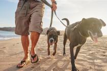Kakva obuka pasa postoji i šta ona podrazumeva?