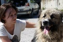 Dalida Kozlić: Psi su vještački stvorena meta i proglašeni su zlom u društvu