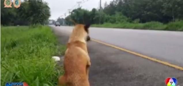 Poginuo pas koji je godinu dana čekao vlasnika