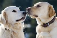 Što nam psi žele reći, a ne mogu