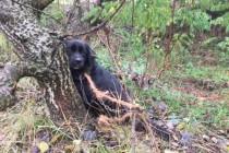 Subotičani daju 100 evra za ime vlasnika ovog psa: Vezao ga lancem u šumi i otišao…