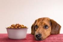 Namirnice kojima možete hraniti svog psa, a i vi ih konzumirate