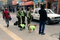 Kako je Čile rešio problem pasa lutalica