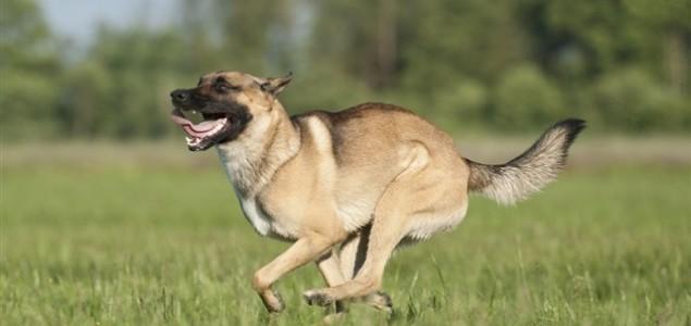 Psi su nam sličniji nego što to mislimo