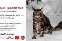Revijalna izložba mačaka