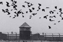 Zašto Andrej Plenković i Kolinda Grabar-Kitarović zaziru od sjećanja na holokaust?
