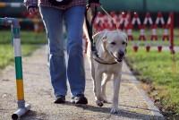 Pas i njegova umijeća