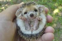 Vozači oprez – pazite na ježeve! Na cesti niste sami, na cesti su i životinje!