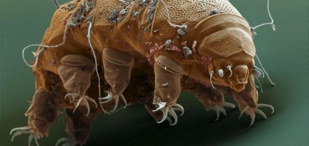 Naučnici otkrili tajnu najjačih životinja na svetu