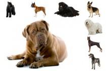 Osam poznatih emocija kod pasa