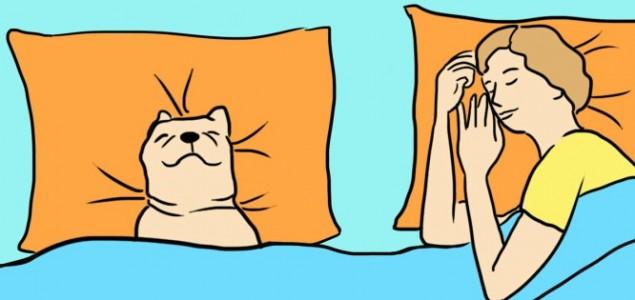 Spavanje sa psom je dobro, evo zbog čega!