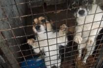 Azil u Prači trenutno dom za 500 pasa: Radnici i zaštitari životinja ih hrane i čiste