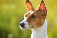 """Istraživanje pokazalo da psi mogu """"pričati"""" s ljudima"""