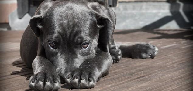 Godišnje se udomi tek 4000 pasa, a napusti ih se oko 15.000