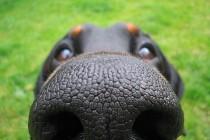 8 neobičnih stvari koje psi mogu da nanjuše