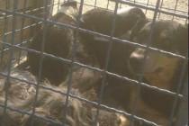 Gradski azil u Zenici: Pakao za pse