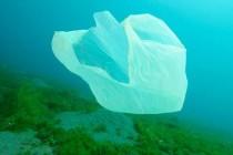 Alarmantno: Do 2050. u moru će biti više plastike nego ribe!
