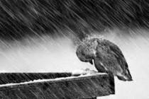 Zbog nevremena masovno stradale ptice
