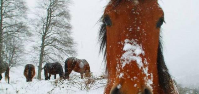 Samoubistvo konja