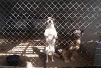 GROBNICE U PRAČI: Tri i po miliona za masovno ubijanje pasa