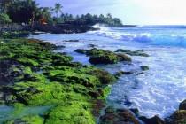 Sve kiseliji oceani pogubno utječu na ekosisteme