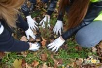 Peta terenska akcija sadnje drveća u Gradu Tuzla