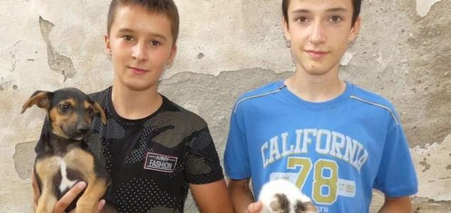 Dječaci iz Modriče Nemanja i Bogdan napravili azil za pse i mačke od svog džeparca