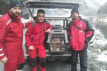 Pogledajte akciju spašavanja psa na Jablaničkom jezeru