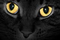 Zašto mačke vide u mraku?