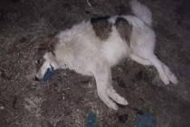 Tko je odgovoran za brutalno ubijanje pasa u Gornjem Vakufu/Uskoplju?